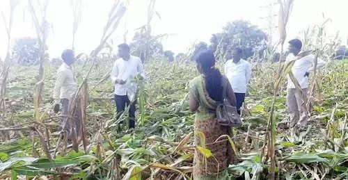 मनोज कायंदे यांच्याकडून पीक नुकसानीची पाहणी, शेतकऱ्यांना दिला धीर